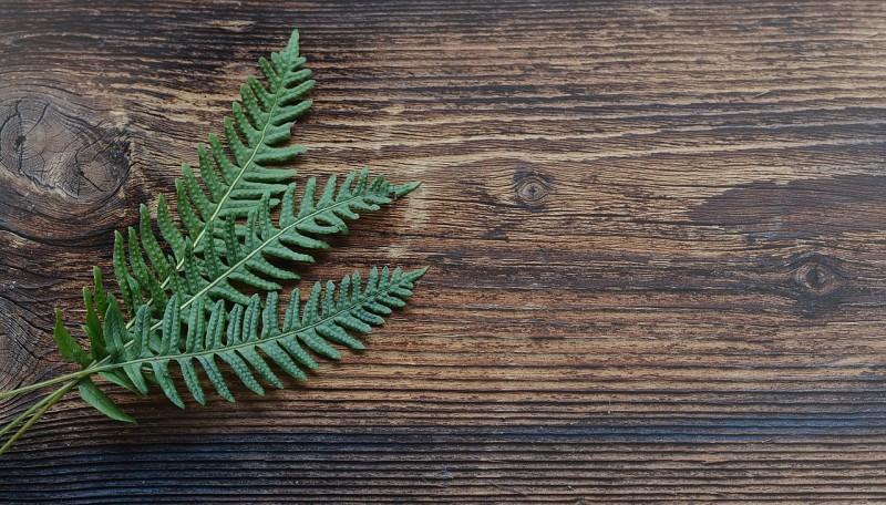 Grønt og allergifrit miljø med kunstige planter