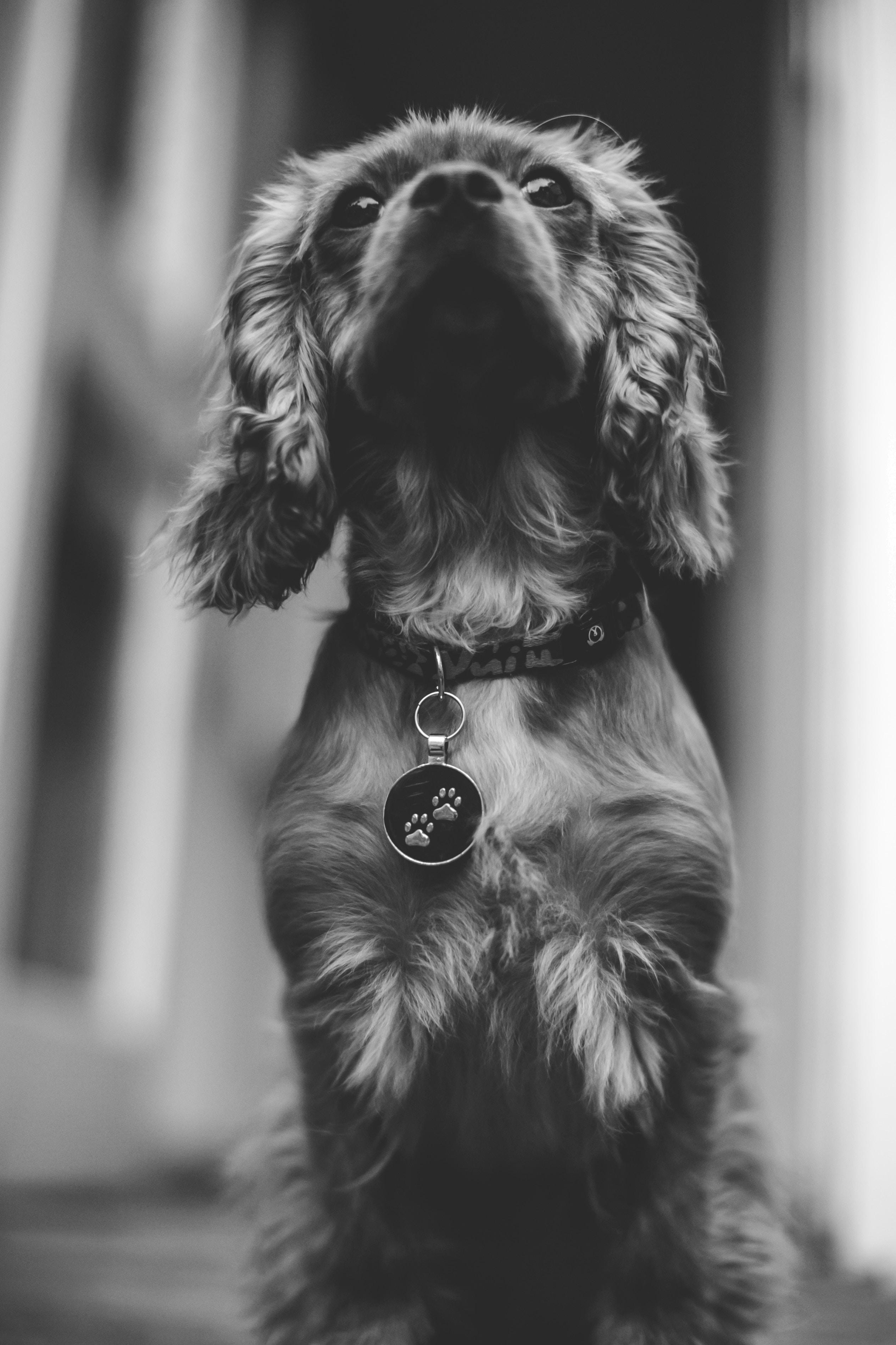 Husk at hundetegn er lovpligtigt i Danmark